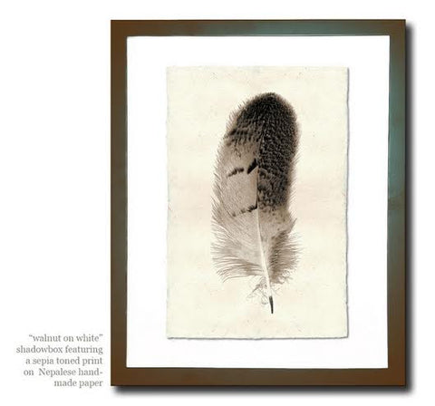 Roy Barloga Fine Feather Print Study 6 - Photography - Shop Nectar - 8