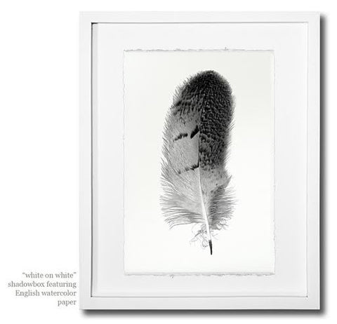 Roy Barloga Feather Print Study 8 - Photography - Shop Nectar - 5