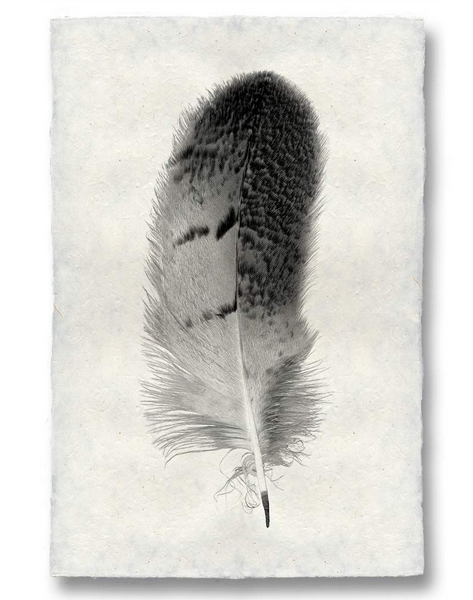 Roy Barloga Wispy Feather Print Study 7 - Photography - Shop Nectar - 1