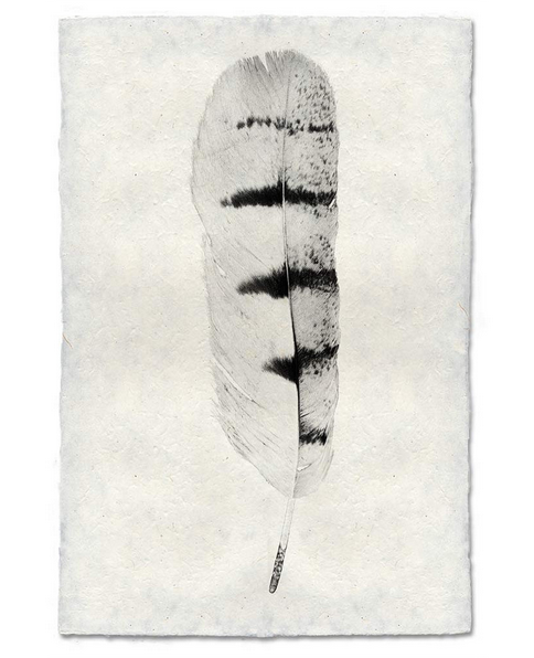 Roy Barloga Feather Print Study 8 - Photography - Shop Nectar - 1