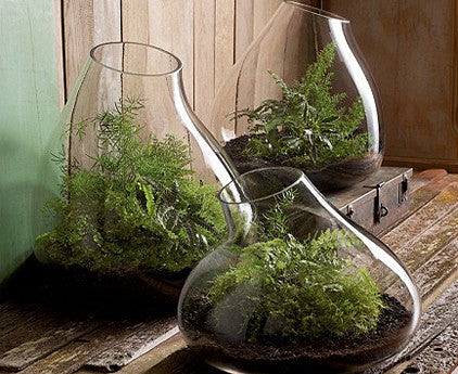 Roost Rustic Recycled Glass Bubble Dome Terrariums - Terrariums - Shop Nectar - 1