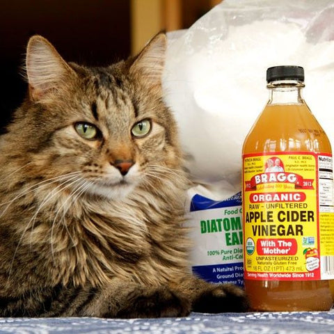 10 Natural Home Flea Remedies For Cats Meowingtons