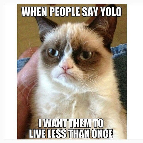 20 Hilarious Cat Memes That Will Make You Lol Meowingtons