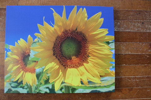 Sunflowers Photo Print on Canvas 16x20