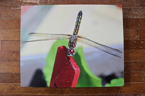 Dragonfly Photo Print on Canvas 16x20