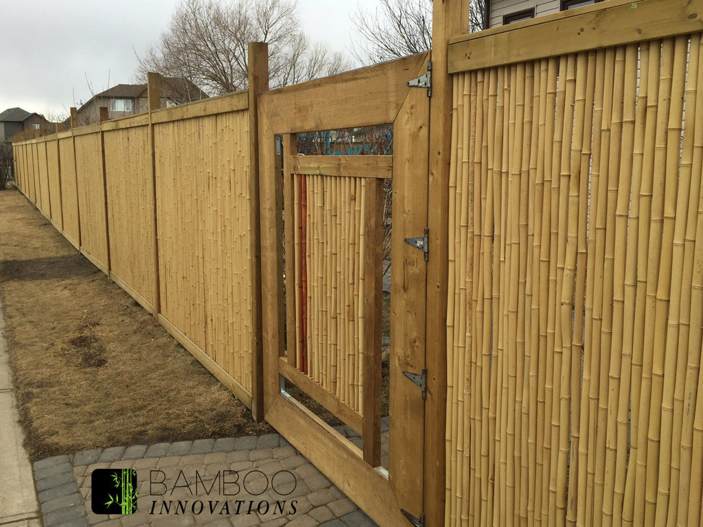 "1"" 6' x 8' Natural Bamboo Fence roll"