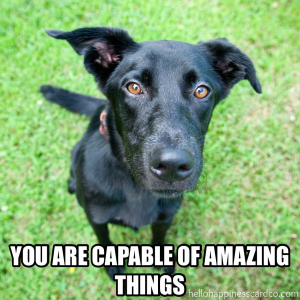 you are capable of amazing things encouragement dog