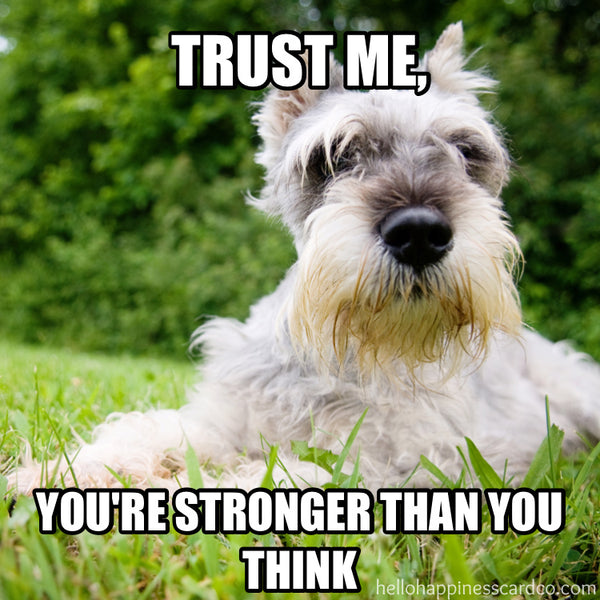 trust me... you're stronger than you think encouragement dog