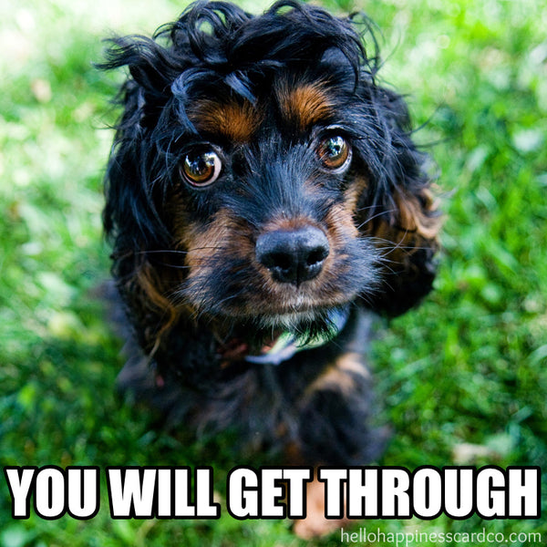 you will get through encouragement dog