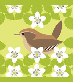 Bird Notes : Wren