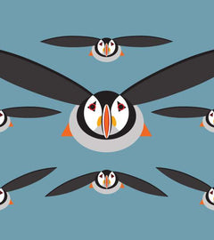 I Like Birds - All about the Puffin