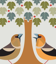 I Like Birds - All about the Hawfinch