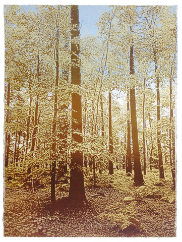 Anna Harley - Autumn Beech wood. screen prints