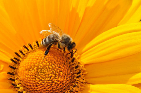 Is EMF Exposure Killing the Bees?