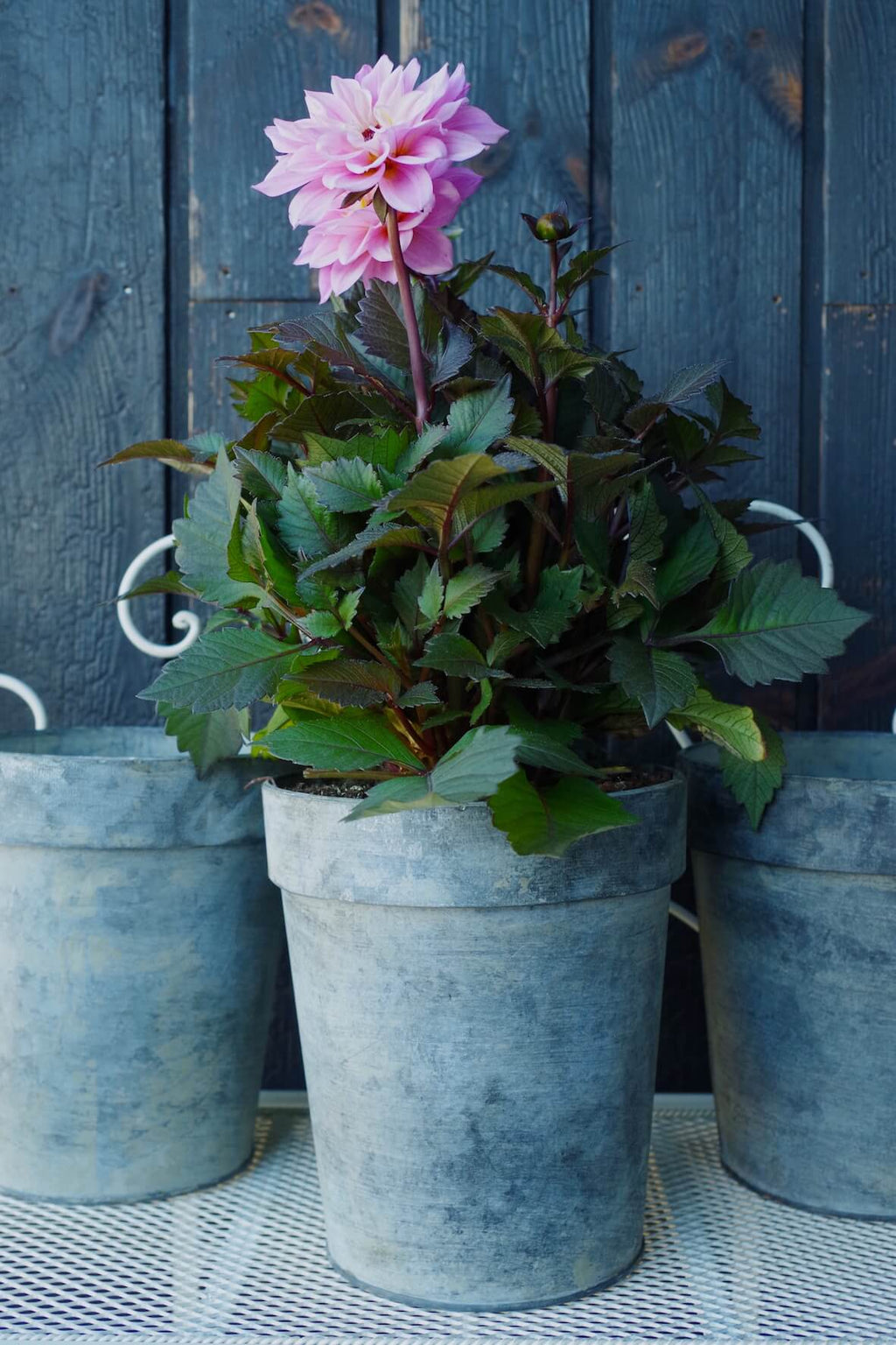Galvanised Flower Pot Large - Set of 3