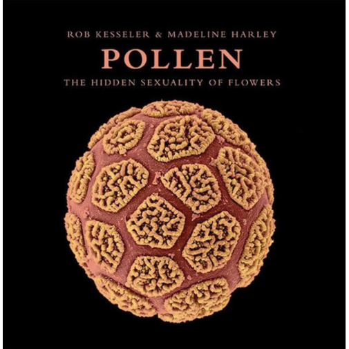Pollen: The Hidden Sexuality of Flowers, by Rob Kesseler
