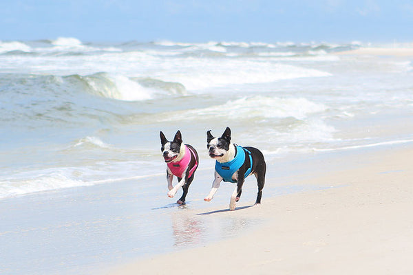 Your pup will love Cape San Blas, Florida, USA