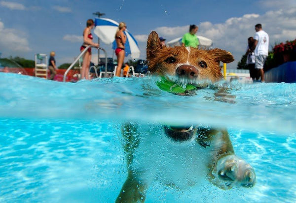 The Resort Canino Can Jane in Roca del Valles, Spain has a dog water park!