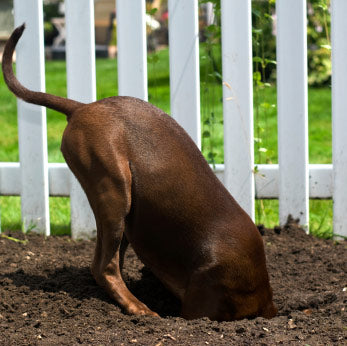 8 habits your dog needs to break: digging