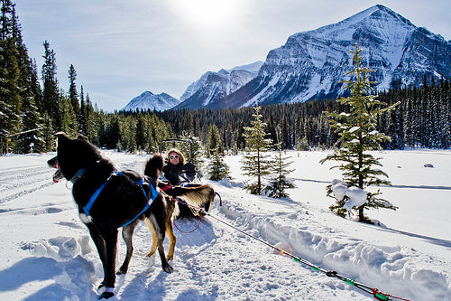 Visit Banff, Alberta, Canada with your furry best friend