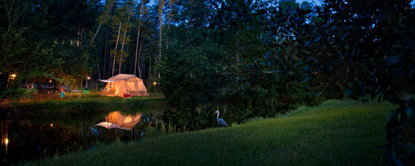 Disney's Campsites at Fort Wilderness Resort: Florida, USA is pet friendly!