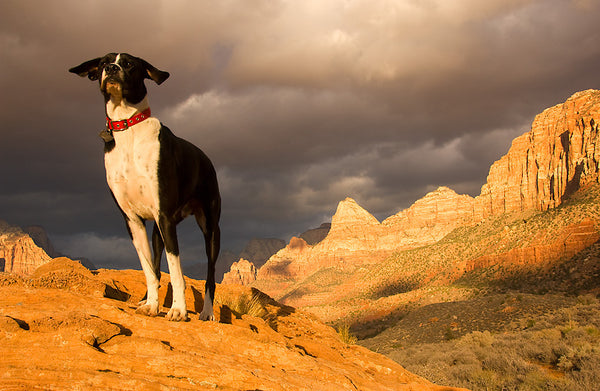 Head to Utah, USA for an outdoor adventure with your pup!