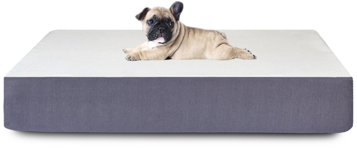 pug on a bed