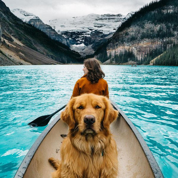 Head to Lake Louise, Alberta, Canada for a picturesque hot spot to travel with your pooch