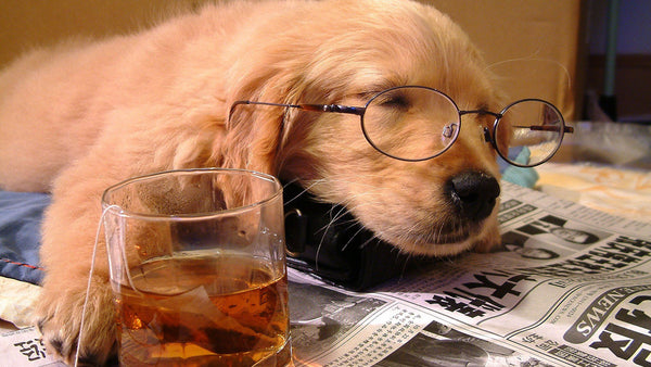 This Is What Your Go-To Alcoholic Beverage Says About Your Dog