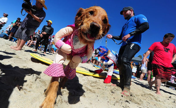 SurfDog Competition: Huntington Beach, California, USA