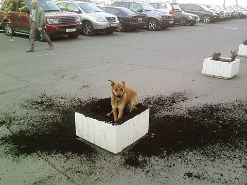 If your dog is a digger you know how frustrating it can be.