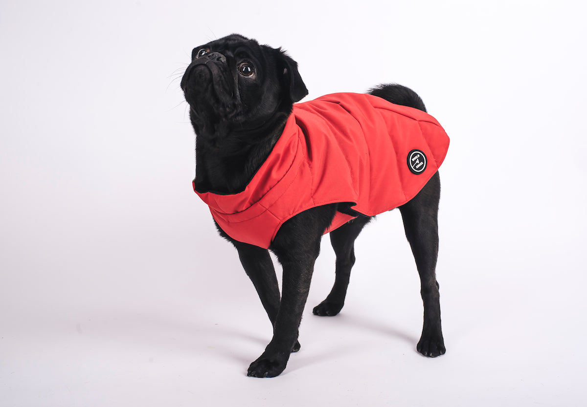... The 5-Second Dog Parka ...