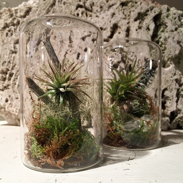 Highball Terrarium