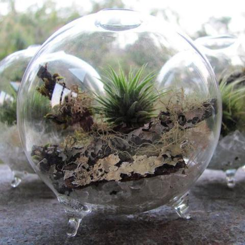 Air-Plant Terrarium