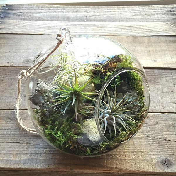 Hanging Air-plant Terrarium