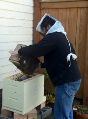 Shaking a honey bee package