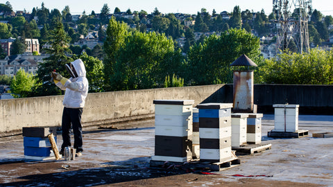 Backyard Beekeeping Classes