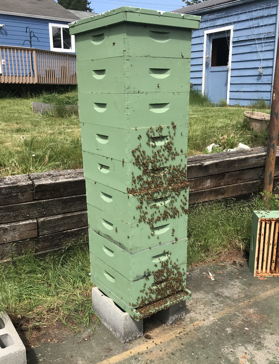 Nucleus Hive Orders - Randy Oliver