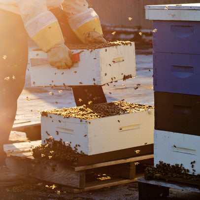 Host a Hive and Learn about Bees