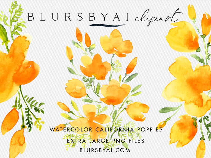 Watercolor california poppies clipart, extra large, commercial license