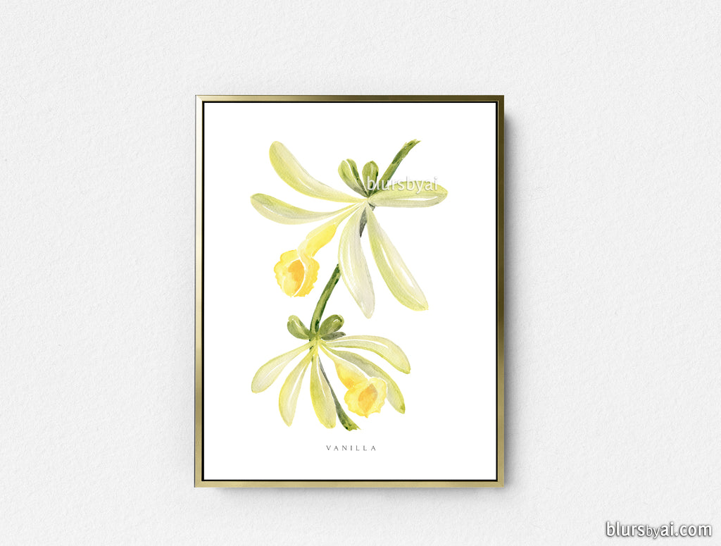 Printable vanilla watercolor illustration - Personal use