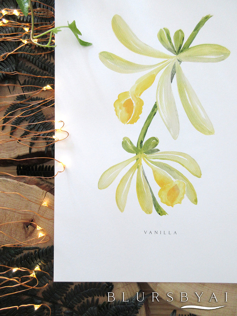 Printable vanilla watercolor illustration