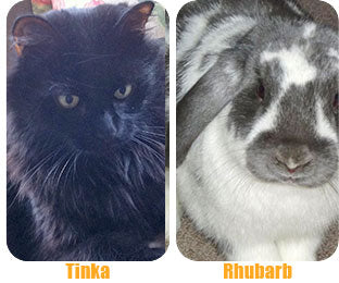 The CoatHook undercoat pet comb works on long-haired cats and rabbits