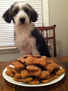 bearded collie with dog cookies