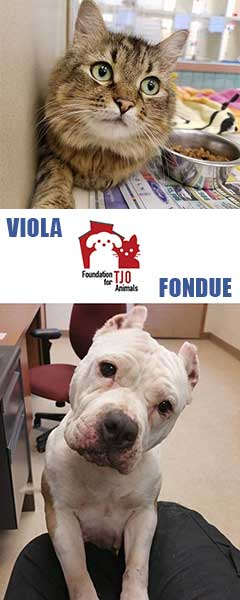 Foundation for TJO Animals cat and dog