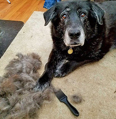 Shepherd / Husky / Lab mix with the CoatHook pet comb and a giant pile of fur