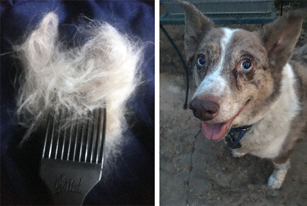 The CoatHook pet comb with Merle Australian shepherd
