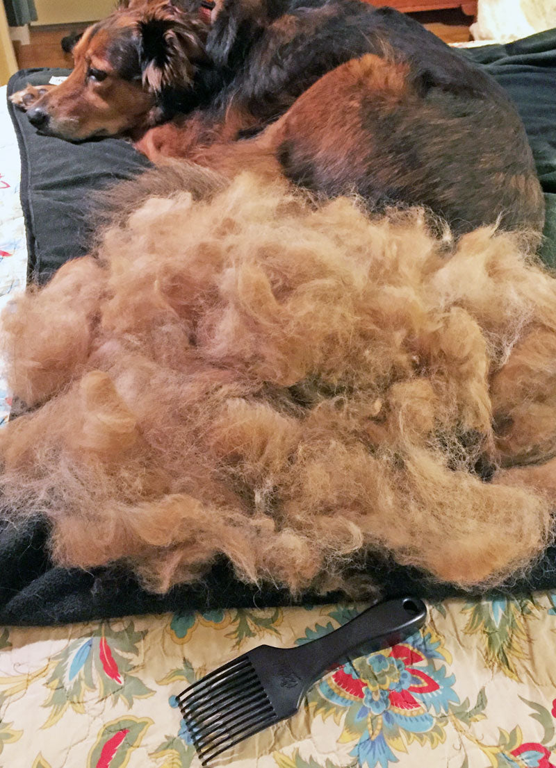 Dixie the dog with a huge pile of combed out fur