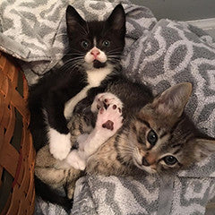 Two cuddling kittens at Forever Home Feline Ranch