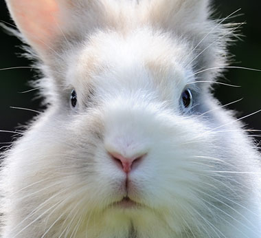 It's Even Great for Bunnies